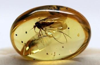 Hogyan kerülhettek vízirovarok a borostyánkövekbe?