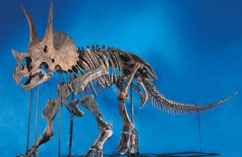 A dinoszauruszok koponyájának különös díszítettsége