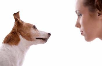 Tudják a kutyák, hogy mire gondol az ember?
