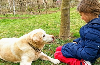 Younger and playful dogs form eye contact faster