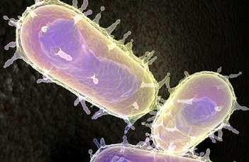 Kórokozó mikrobák újabb immunrendszer-gátló fegyverét sikerült azonosítani