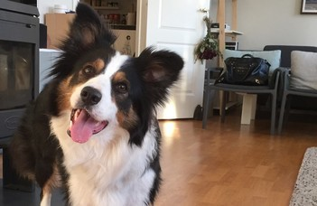 Can dogs rapidly learn words?