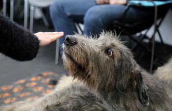 A kutyák tényleg kiszagolják a félelmet?