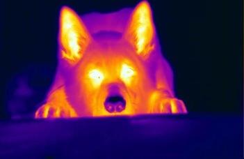 Infravörös-érzékelés a kutya orrában