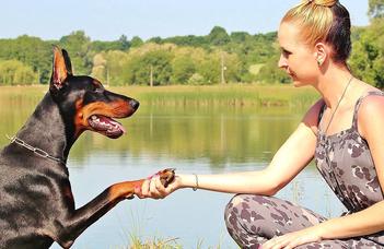 Hány magyar szót ismer a kutyád?