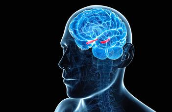Hogyan működik az agy idegsejthálózata?