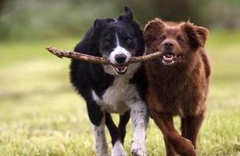 Kiderült, mennyire okosak a kutyák