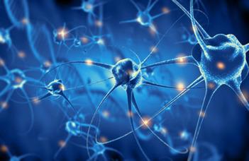 A fejlődő idegrendszer eddig ismeretlen szabályozó mechanizmusa