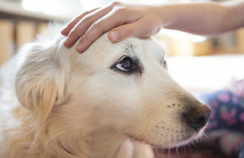 Magyar kutatók vizsgálták a kutyák tudatosságát