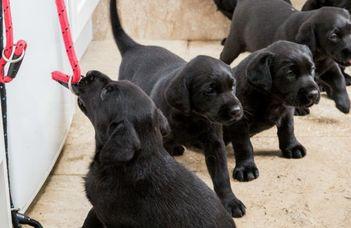 Ezek a leghisztisebb kutyafajták