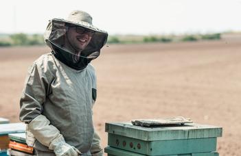 Méhészet a nagyvárosban