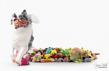 Vannak kutyák, amelyek akár száz játék nevét is képesek megtanulni