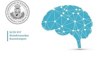 Az ELTE kutatói jelentős különbségeket találtak a férfi és a női agy között