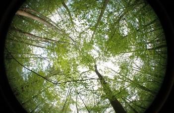 A fák lombkoronája védi az erdőt a globális felmelegedéstől
