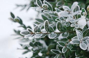 Mibefolyásolja a növények belső biológiai óráját?