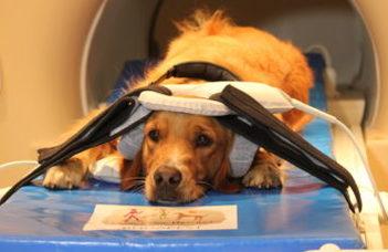 A kutyák a hangjuk alapján is azonosítják az embereket