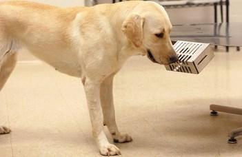 Hiába ismerheti fel a kutya a koronavírusos beteget