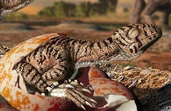 Miről árulkodik a dinoszaurusztojások héjszerkezete?