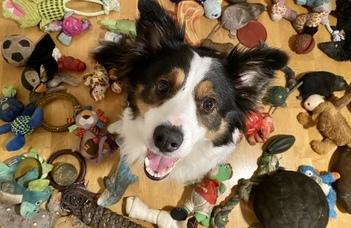 A kutya is képes tárgyakat csoportosítani